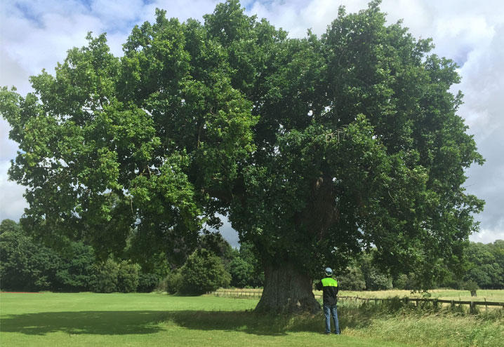 tree health reports Northants Oxfordshire