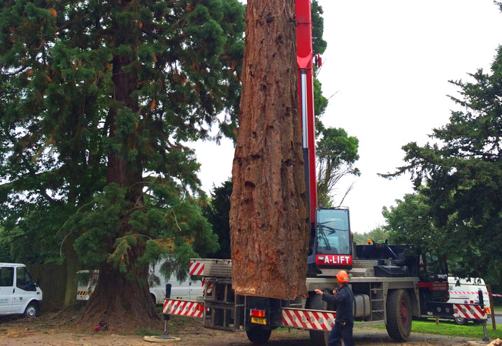 Emergency Tree Removal Northants Oxfordshire